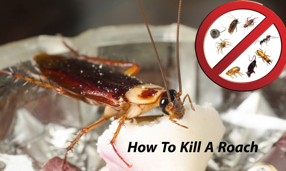 How To Kill A Roach