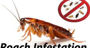 How To Get Rid Of Roach Infestation